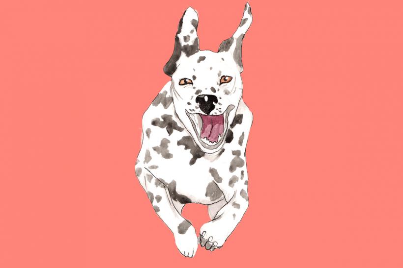 sex with dalmatians