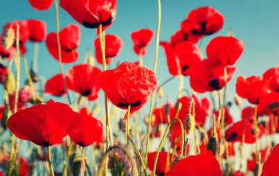 "Poppies might be ""natural,"" but last time I checked, opium's not great for you... Image: Thinkstock."